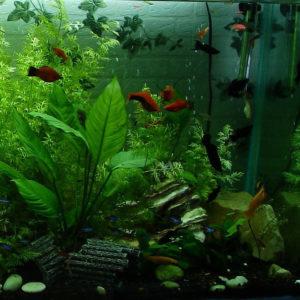 aquarium-