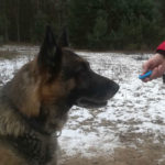 Clicker-Training funktioniert bei jedem Hund?