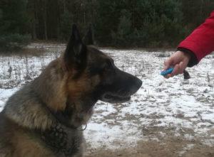 clicker-training-schaeferhund