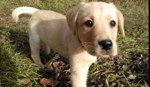 dog-lilly