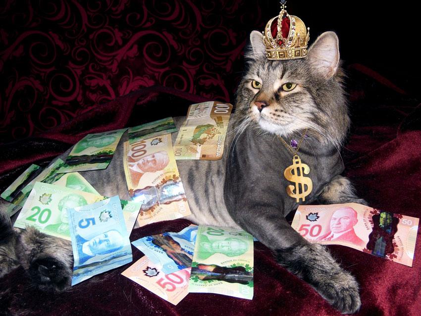 Katzensteuer 2021