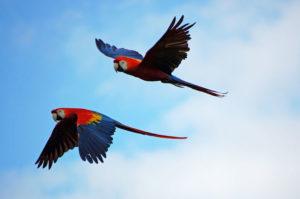 papagei-haltung
