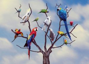 parrots-