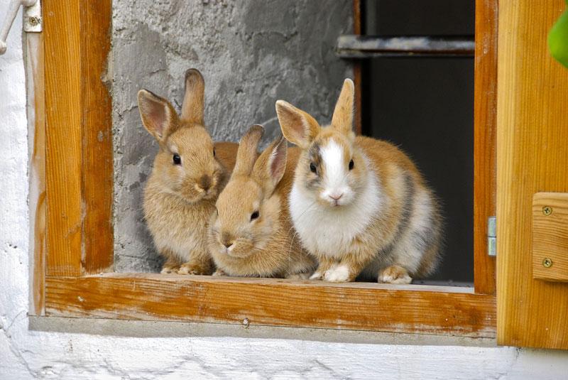 kaninchen-heu