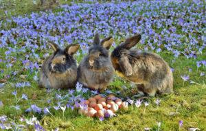 kaninchen-oberbild
