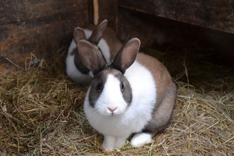 kaninchen-stall