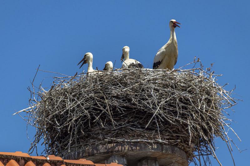 storch-nest