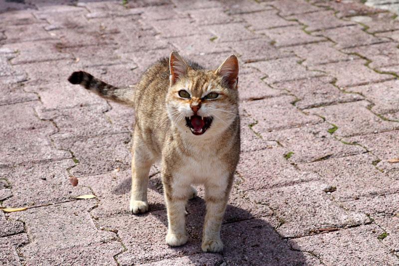 cat-lächeln
