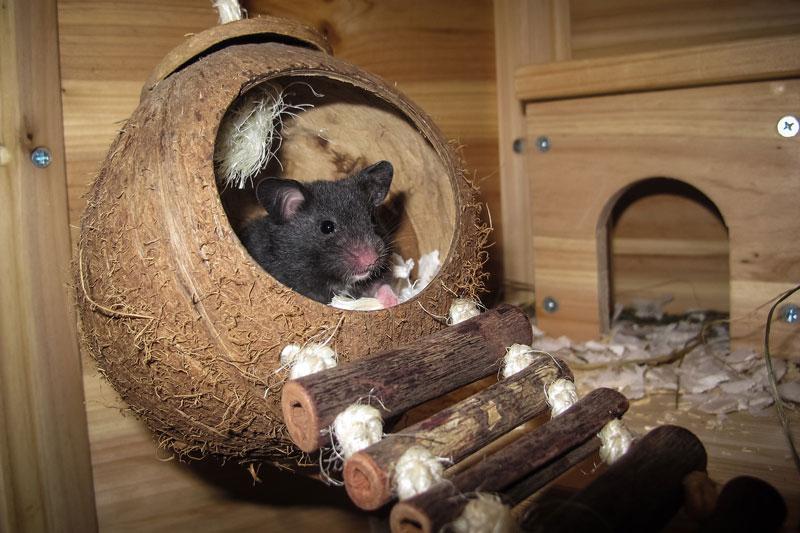 hamsterr-heim