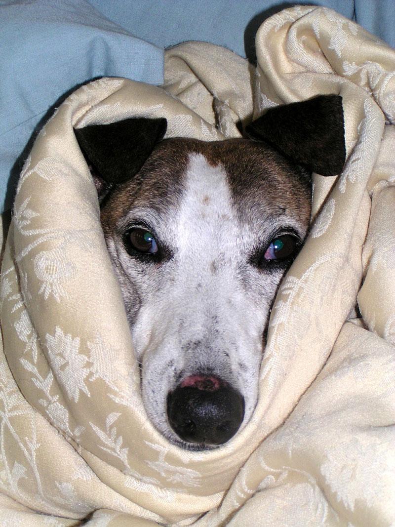 hund-krank