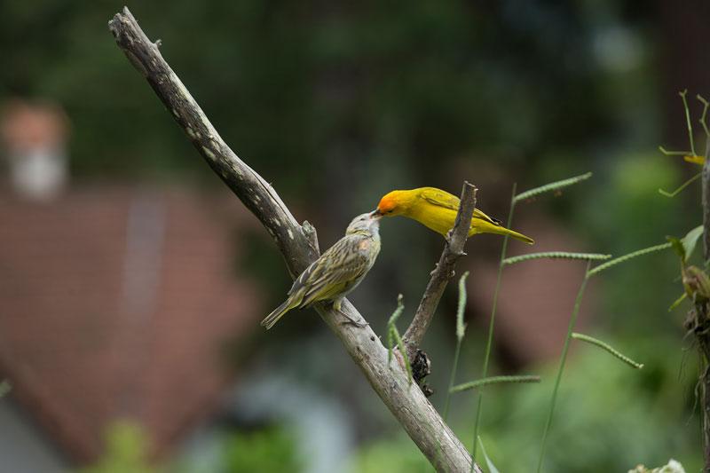 vogel-füttert