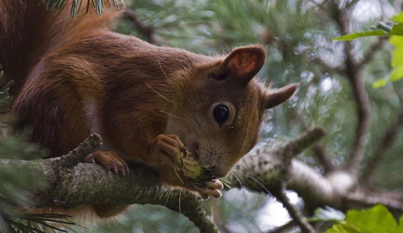 eichhörnchen-titel