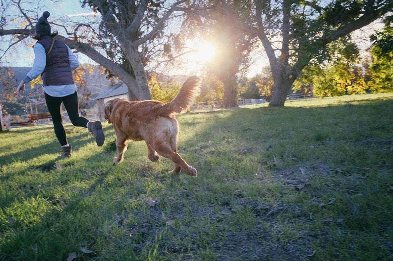 Hund-und-Mensch